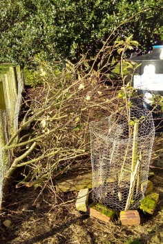The second apple pruning pile...