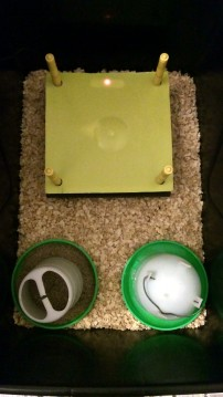 The brooder box set-up.