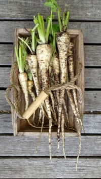 Parsnips seem to grow well in my garden.