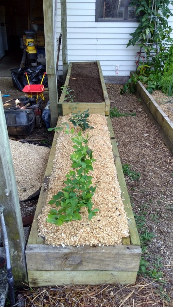 It took a lot of soil and compost to fill these beds, especially the extra high Raspberry Bed at the back.