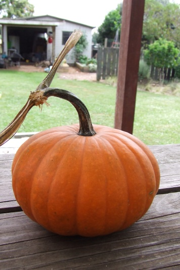A Small Jack pumpkin.