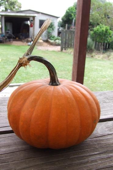 A Small Jack pumpkin.
