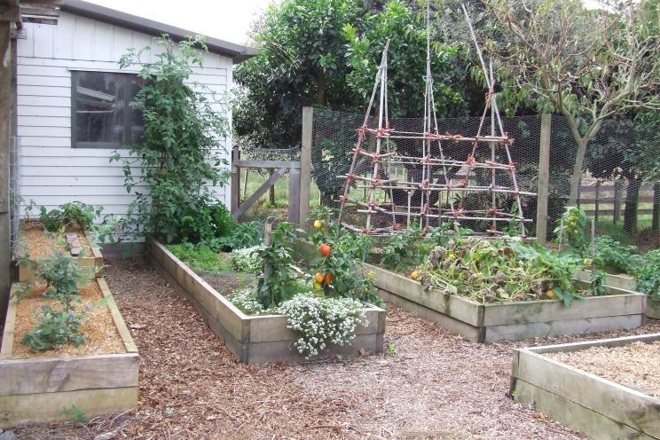 More raised beds are born and more are being planned.