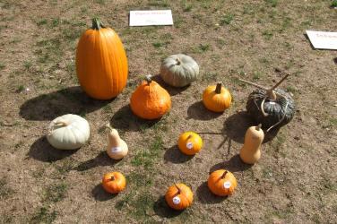 Most Perfect Pumpkin, Open Class.