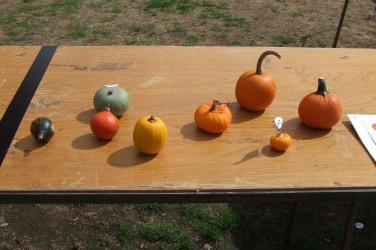 Best Miniature Pumpkin.