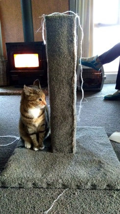 """Nala, eldest fur child, suddenly took an interest in the scratching post. """"This post is now mine!"""""""