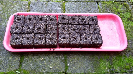 The first trial run - two tomato varieties have been sown into the soil blocks.