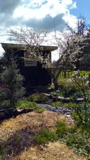 The Plum Tree Garden, with Billington plums.