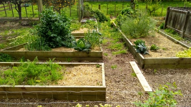 It is hard looking at my Vege Garden and seeing so many weeds on the paths and overgrown things. But I have to take one day at a time at the moment. One day, it will get done.