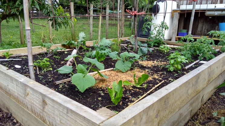 The South Bed. Stuffed full of veggies.