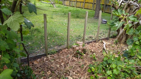 Fencing success. At least for this section. The stump is from the ivy-smothered camellia that The Husband cut down recently.