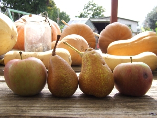 Apples and pears from our trees are very high on my list of thankfulness right now.