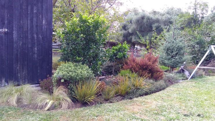 The garden now, surviving drought conditions.
