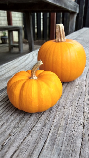 These could have been Best Mature Miniature Pumpkin and Most Perfect Pumpkin.
